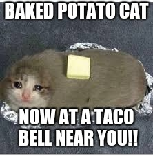 BAKED POTATO CAT; NOW AT A TACO BELL NEAR YOU!! | image tagged in potato cat,potato,memes,cats | made w/ Imgflip meme maker