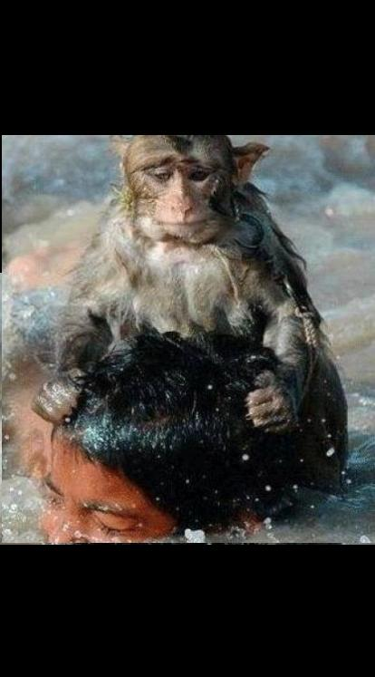 Hitman Monkey Blank Template Imgflip