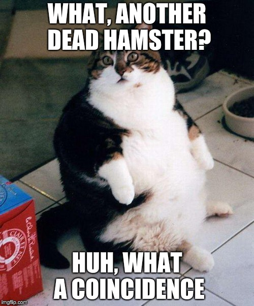 fat cat - Imgflip