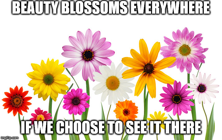 BEAUTY BLOSSOMS EVERYWHERE IF WE CHOOSE TO SEE IT THERE | image tagged in spring flowers | made w/ Imgflip meme maker