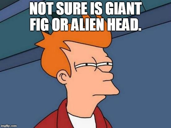 Futurama Fry Meme | NOT SURE IS GIANT FIG OR ALIEN HEAD. | image tagged in memes,futurama fry | made w/ Imgflip meme maker
