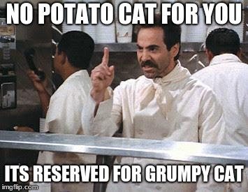No for you | NO POTATO CAT FOR YOU ITS RESERVED FOR GRUMPY CAT | image tagged in no for you | made w/ Imgflip meme maker