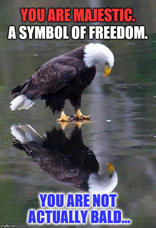 "We all need ""self pep talks"" sometimes. (And to the follicly challenged, you are also beautiful. :-) ) 