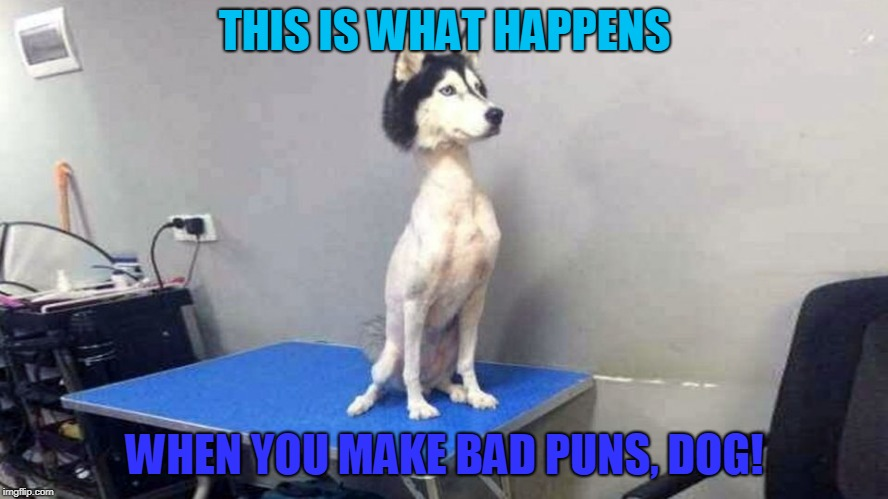 Shaved Husky |  THIS IS WHAT HAPPENS; WHEN YOU MAKE BAD PUNS, DOG! | image tagged in shaved,husky,memes | made w/ Imgflip meme maker