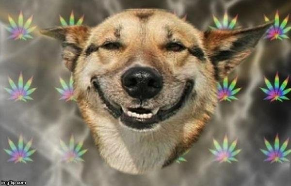 stoned dog | image tagged in stoned dog | made w/ Imgflip meme maker