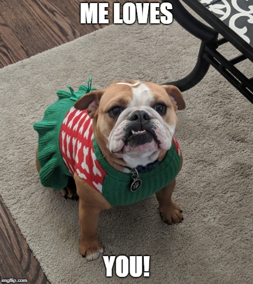 ME LOVES YOU! | image tagged in bulldog_olivia bulldog cute meme | made w/ Imgflip meme maker
