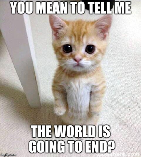Cute Cat Meme | YOU MEAN TO TELL ME THE WORLD IS GOING TO END? | image tagged in memes,cute cat | made w/ Imgflip meme maker