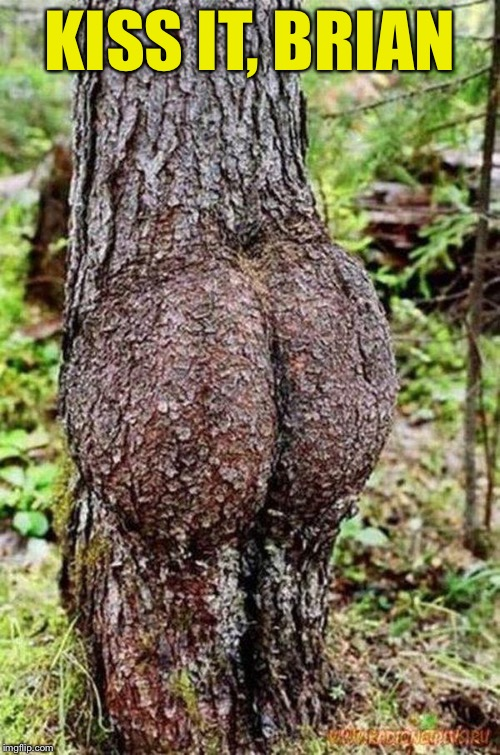 Sexy Tree | KISS IT, BRIAN | image tagged in sexy tree | made w/ Imgflip meme maker