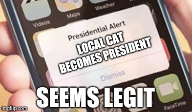 Presidential Alert Meme | LOCAL CAT BECOMES PRESIDENT SEEMS LEGIT | image tagged in presidential alert | made w/ Imgflip meme maker
