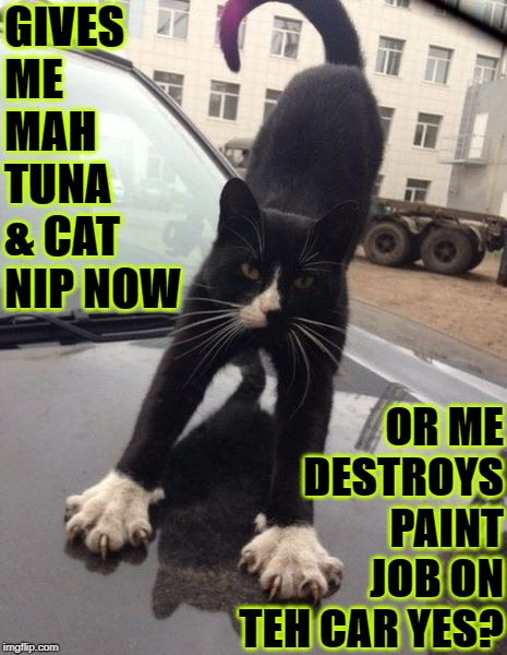 TUNA & NIP OR ELSE | GIVES ME MAH TUNA & CAT NIP NOW OR ME DESTROYS PAINT JOB ON TEH CAR YES? | image tagged in tuna  nip or else | made w/ Imgflip meme maker