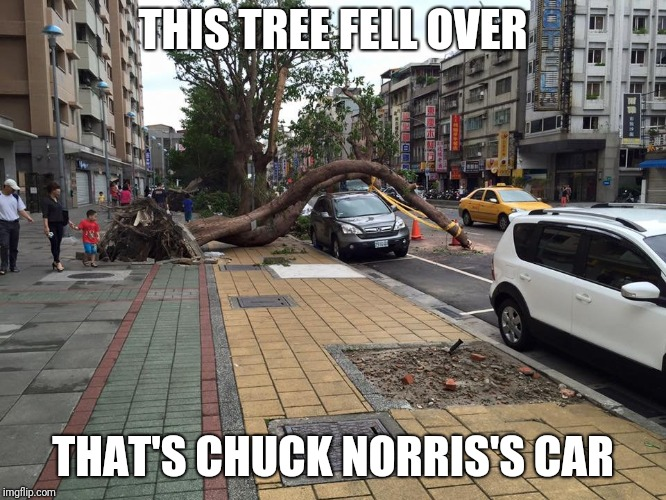 It wouldn't DARE! | THIS TREE FELL OVER THAT'S CHUCK NORRIS'S CAR | image tagged in tree falls over car,memes,chuck norris | made w/ Imgflip meme maker