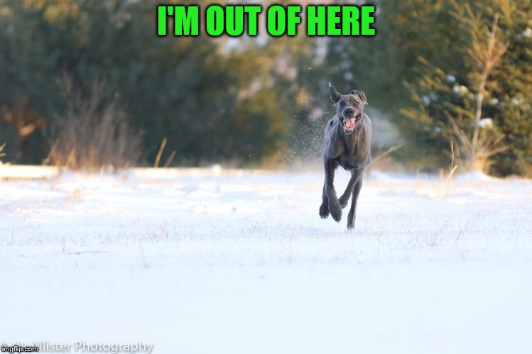 Dog Running | I'M OUT OF HERE | image tagged in dog running | made w/ Imgflip meme maker