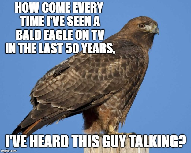 So many cartoons and TV shows have had bald eagles with a scream | HOW COME EVERY TIME I'VE SEEN A BALD EAGLE ON TV IN THE LAST 50 YEARS, I'VE HEARD THIS GUY TALKING? | image tagged in lies,bald eagle,red tailed hawk,sound,mainstream media,media | made w/ Imgflip meme maker