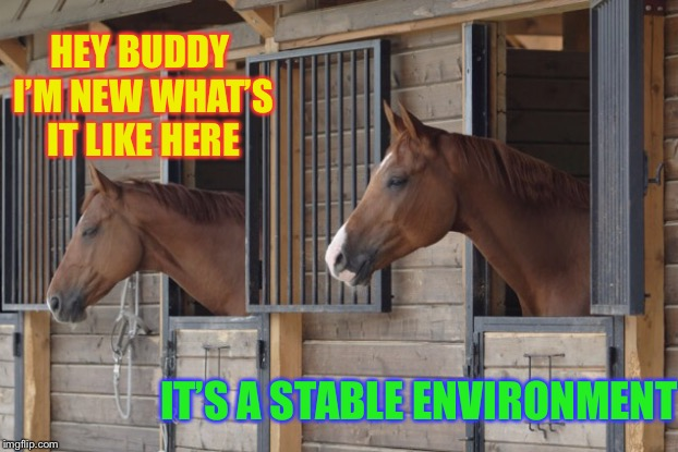 New guy in the yard... | HEY BUDDY I'M NEW WHAT'S IT LIKE HERE IT'S A STABLE ENVIRONMENT | image tagged in puns,prison,horses | made w/ Imgflip meme maker