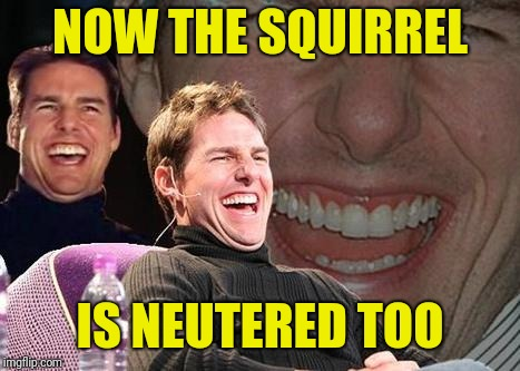 Tom Cruise laugh | NOW THE SQUIRREL IS NEUTERED TOO | image tagged in tom cruise laugh | made w/ Imgflip meme maker