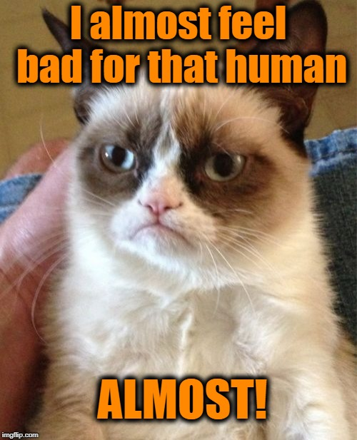 Grumpy Cat Meme | I almost feel bad for that human ALMOST! | image tagged in memes,grumpy cat | made w/ Imgflip meme maker