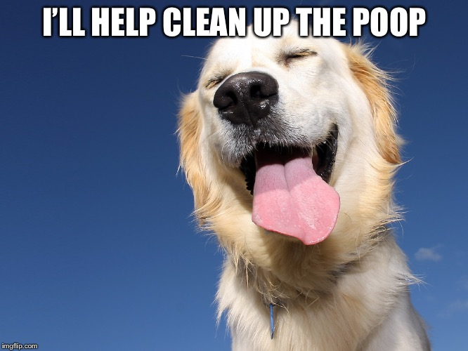 Who's a good boy | I'LL HELP CLEAN UP THE POOP | image tagged in who's a good boy | made w/ Imgflip meme maker