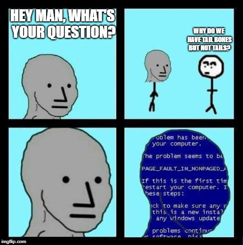 NPC ERROR | HEY MAN, WHAT'S YOUR QUESTION? WHY DO WE HAVE TAIL BONES BUT NOT TAILS? | image tagged in npc error | made w/ Imgflip meme maker