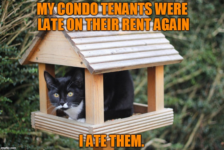 Those Late Fees Are Murder!! | image tagged in cat,bird house | made w/ Imgflip meme maker