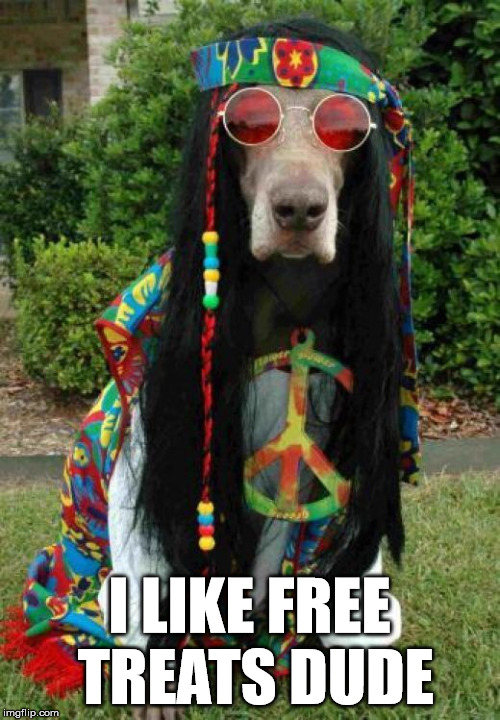 They always beg |  I LIKE FREE TREATS DUDE | image tagged in hippie dog,dog,hippie | made w/ Imgflip meme maker
