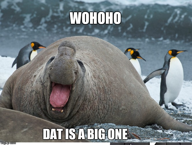 wolopo big one | WOHOHO DAT IS A BIG ONE | image tagged in funny | made w/ Imgflip meme maker