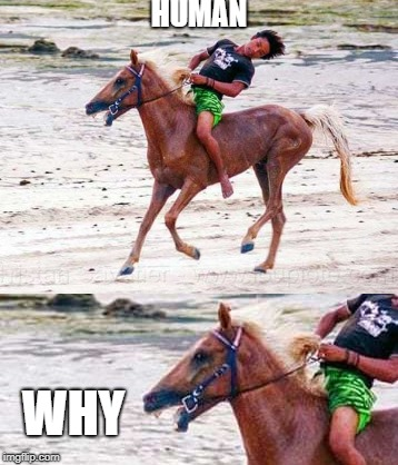 Why u no sit right |  HUMAN; WHY | image tagged in horse,funny,why,memes,annoyed,idiots | made w/ Imgflip meme maker