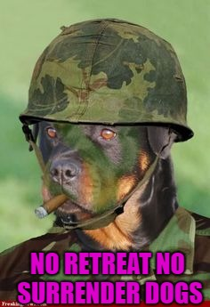 NO RETREAT NO SURRENDER DOGS | made w/ Imgflip meme maker