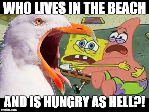 Inhaling Seagull Eats You | WHO LIVES IN THE BEACH AND IS HUNGRY AS HELL?! | image tagged in inhaling seagull eats you,funny,inhaling seagull | made w/ Imgflip meme maker