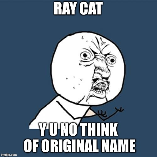 Y U NOvember, a socrates and punman21 event. Raydog and Ray Cat... | RAY CAT Y U NO THINK OF ORIGINAL NAME | image tagged in memes,y u no,y u november | made w/ Imgflip meme maker
