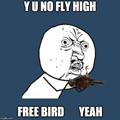 Y U NOvember, a socrates and punman21 event | Y U NO FLY HIGH FREE BIRD       YEAH | image tagged in memes,y u no | made w/ Imgflip meme maker