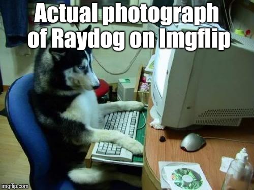 dog on computer | Actual photograph of Raydog on Imgflip | image tagged in dog on computer | made w/ Imgflip meme maker