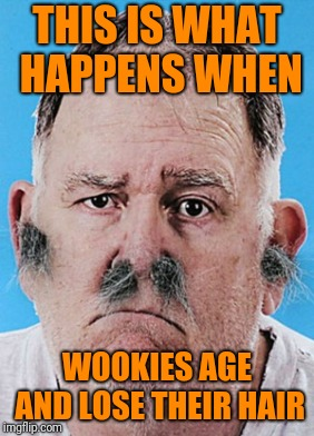 Propecia Would Make a Fortune On Kashyyyk | THIS IS WHAT HAPPENS WHEN WOOKIES AGE AND LOSE THEIR HAIR | image tagged in wookies,facial hair,bad hair day,star wars,bad hair | made w/ Imgflip meme maker