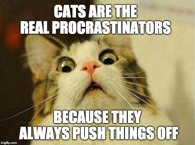 Scared Cat | CATS ARE THE REAL PROCRASTINATORS BECAUSE THEY ALWAYS PUSH THINGS OFF | image tagged in memes,scared cat,scumbag,cats | made w/ Imgflip meme maker