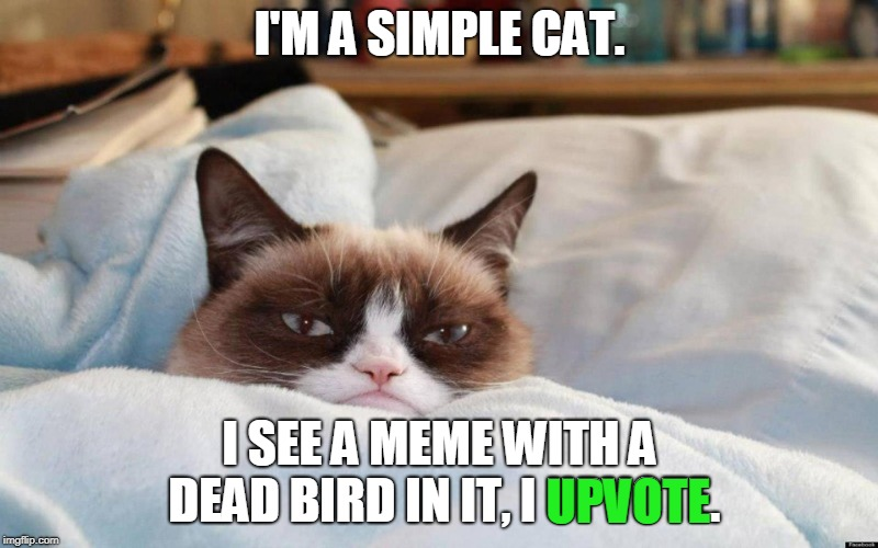 grumpy cat bed | I'M A SIMPLE CAT. I SEE A MEME WITH A DEAD BIRD IN IT, I UPVOTE. UPVOTE | image tagged in grumpy cat bed | made w/ Imgflip meme maker