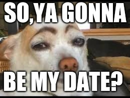 SO,YA GONNA BE MY DATE? | image tagged in memes,funny | made w/ Imgflip meme maker