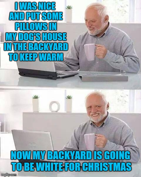 I'm dreaming of a white christmas | I WAS NICE AND PUT SOME PILLOWS IN MY DOG'S HOUSE IN THE BACKYARD TO KEEP WARM NOW MY BACKYARD IS GOING TO BE WHITE FOR CHRISTMAS | image tagged in memes,hide the pain harold,christmas,white christmas,funny,dogs | made w/ Imgflip meme maker