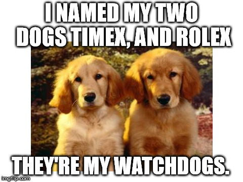 I NAMED MY TWO DOGS TIMEX, AND ROLEX THEY'RE MY WATCHDOGS. | image tagged in two dogs | made w/ Imgflip meme maker