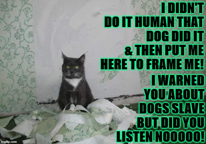 I DIDN'T DO IT HUMAN THAT DOG DID IT & THEN PUT ME HERE TO FRAME ME! I WARNED YOU ABOUT DOGS SLAVE BUT DID YOU LISTEN NOOOOO! | image tagged in dog did it | made w/ Imgflip meme maker