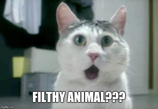 OMG Cat Meme | FILTHY ANIMAL??? | image tagged in memes,omg cat | made w/ Imgflip meme maker