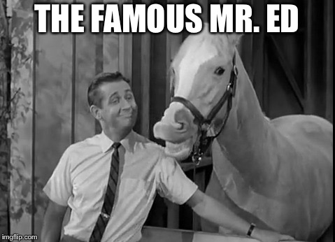 Mr Ed Speaks | THE FAMOUS MR. ED | image tagged in mr ed speaks | made w/ Imgflip meme maker