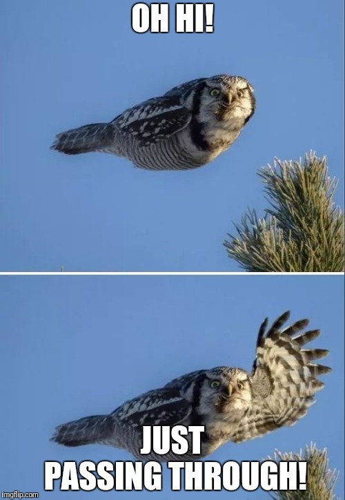 Just passing through | OH HI! JUST PASSING THROUGH! | image tagged in funny owl,just passing through | made w/ Imgflip meme maker