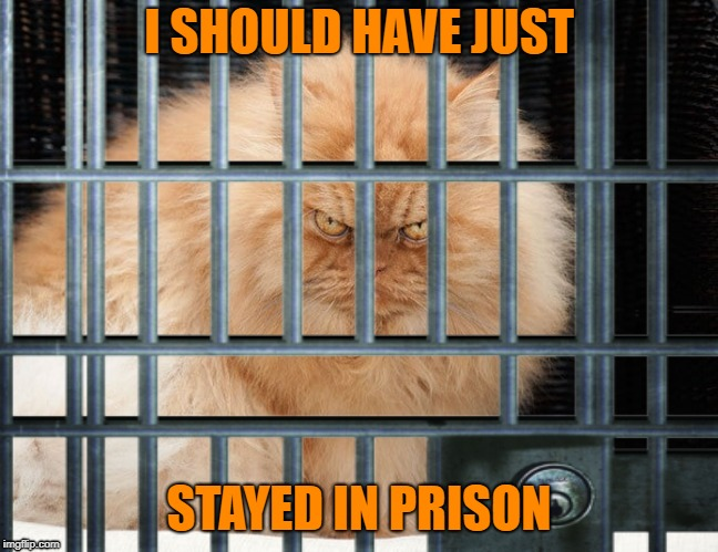 I SHOULD HAVE JUST STAYED IN PRISON | made w/ Imgflip meme maker