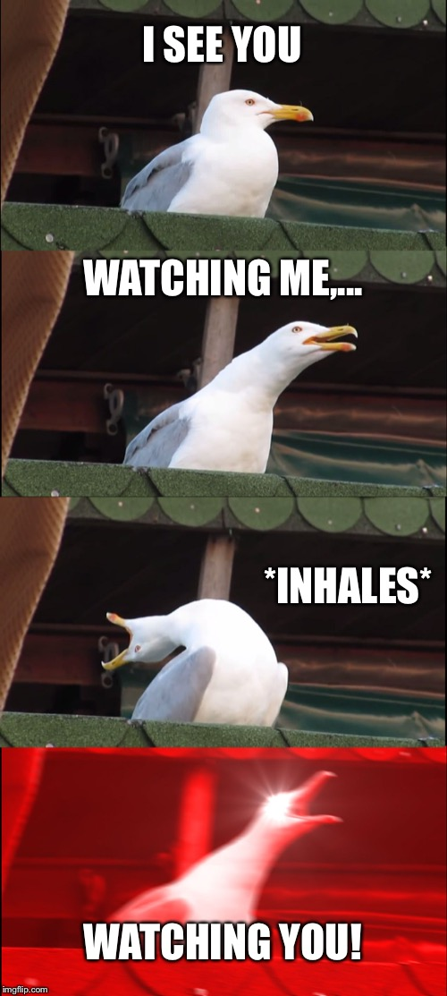 Rogue Traders Inhaling Seagull | I SEE YOU WATCHING ME,... *INHALES* WATCHING YOU! | image tagged in memes,inhaling seagull,music,song lyrics,watching,you | made w/ Imgflip meme maker