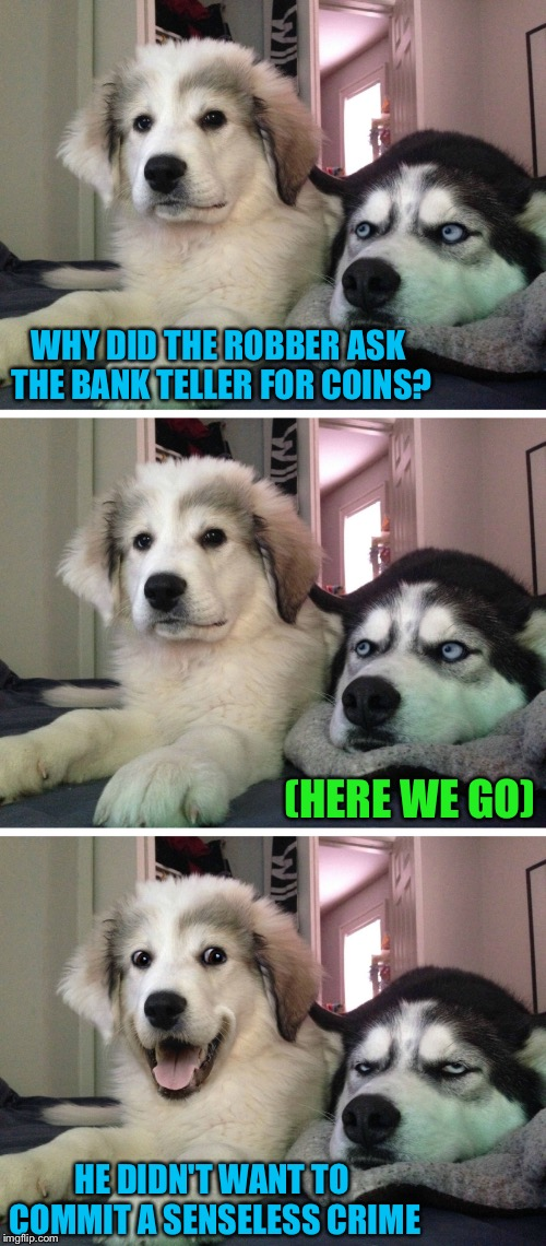 Considerate crook. | WHY DID THE ROBBER ASK THE BANK TELLER FOR COINS? (HERE WE GO) HE DIDN'T WANT TO COMMIT A SENSELESS CRIME | image tagged in bad pun dogs,bank robber,memes,funny | made w/ Imgflip meme maker