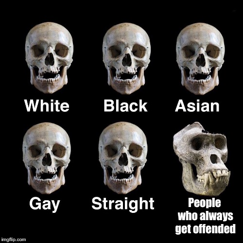 Boneheads | People who always get offended | image tagged in skulls,race,gender,equality,offended,evolution | made w/ Imgflip meme maker
