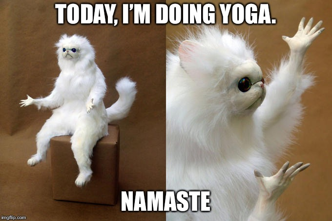 Persian Cat Room Guardian | TODAY, I'M DOING YOGA. NAMASTE | image tagged in memes,persian cat room guardian | made w/ Imgflip meme maker