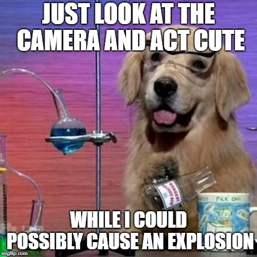 I Have No Idea What I Am Doing Dog | JUST LOOK AT THE CAMERA AND ACT CUTE WHILE I COULD POSSIBLY CAUSE AN EXPLOSION | image tagged in memes,i have no idea what i am doing dog | made w/ Imgflip meme maker