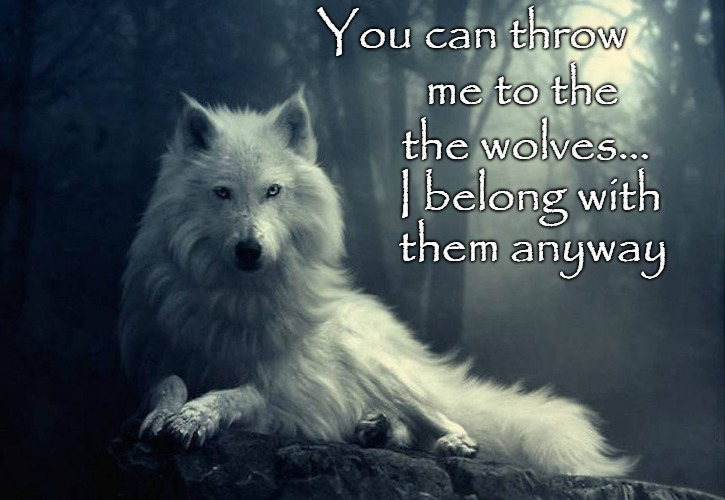 Wolf Wisdom | You can throw me to the the wolves... I belong with them anyway | image tagged in animals,wolf,wolves,indians,native american,native americans | made w/ Imgflip meme maker