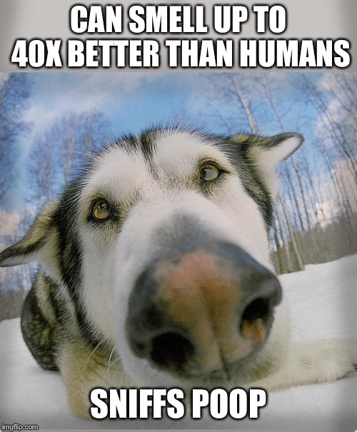 I smell peanuts | CAN SMELL UP TO 40X BETTER THAN HUMANS SNIFFS POOP | image tagged in memes,dog poop | made w/ Imgflip meme maker