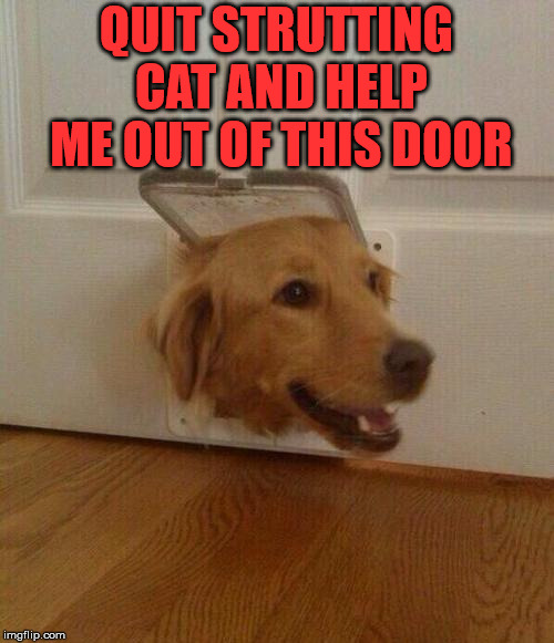 Cat's are jerks | QUIT STRUTTING CAT AND HELP ME OUT OF THIS DOOR | image tagged in dog door,dogs,funny | made w/ Imgflip meme maker